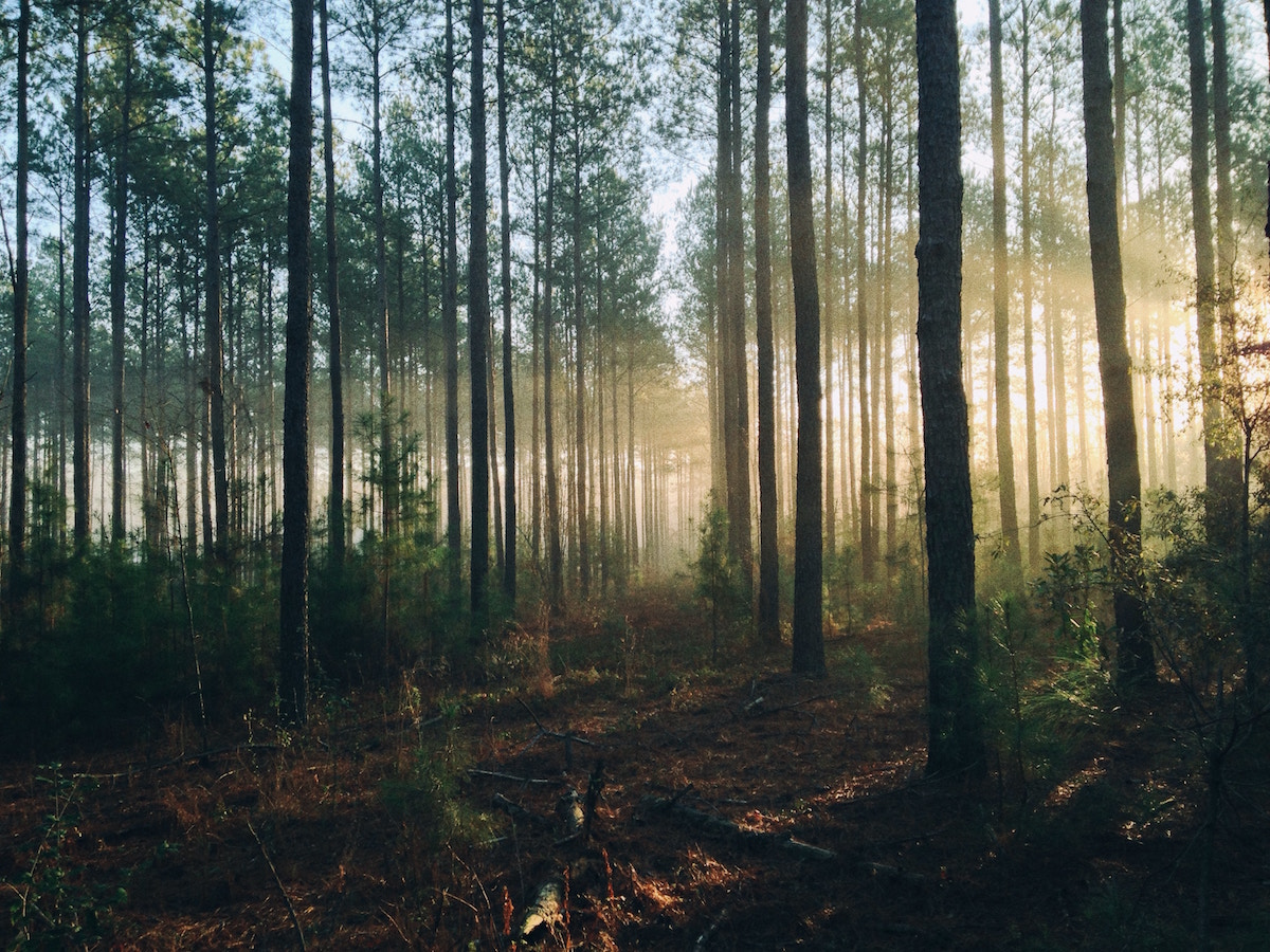 aerial drones in forestry